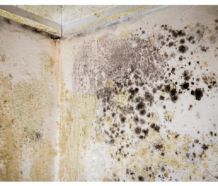 Why SERVPRO Is Mold Growing in Your Tallahassee Bathroom?
