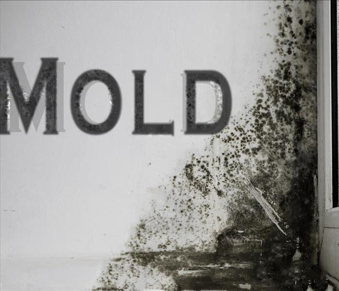Mold Remediation MOLD MYTHS ARE REAL!! Prattville Property Owners Turn to SERVPRO for the Facts and Remediation